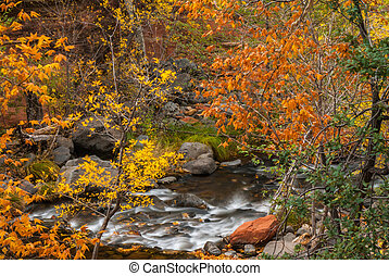 Sedona Foliage on a Cloudy Fall Day - A palette of colors...