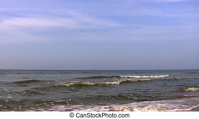 Autumn, sea and migratory birds - Empty beach, calm sea and...