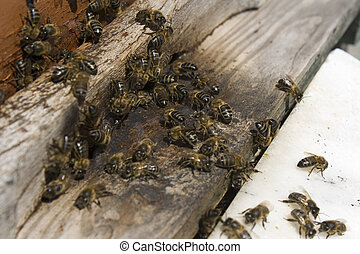bees swarm in theirs hive