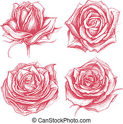 Roses Drawing set 002 - Roses traditional drawing line work...