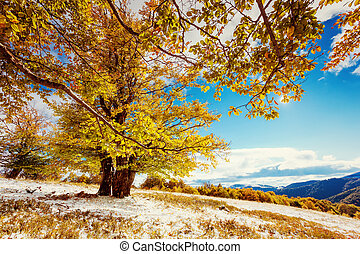 autumn - Beautiful colorful autumn leaves in the forest....