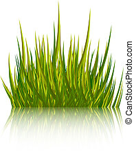 Green grass isolated on white background. Vector illustration.