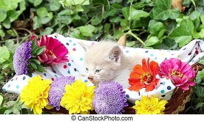 cute kitten in basket with flowers