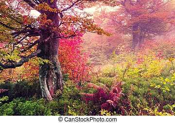 autumn forest - Majestic landscape with autumn trees in...