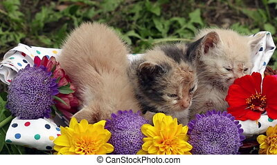 kittens in basket with flowers