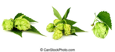 The collage green hop - The collage green hop isolated on...