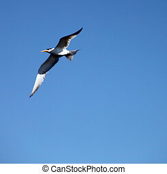 sea bird flying high - cute sea bird flying high above the...