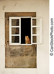 The cat. - A ginger cat  in the window.