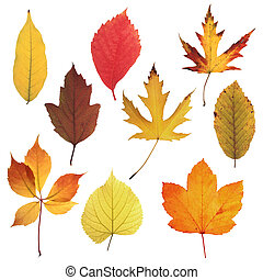 Autumn Leaves Collection 03 - Collection of high quality...