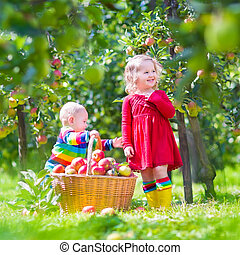 Kids picking apples in a garden - Happy little children,...