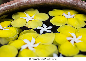 colorful of Plumeria flower floating in the ancient bowl