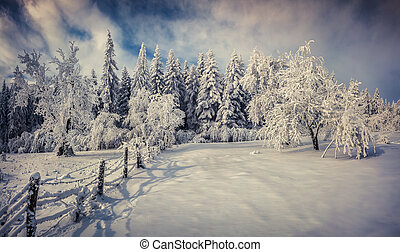 Sunny winter landscape in the forest Retro style