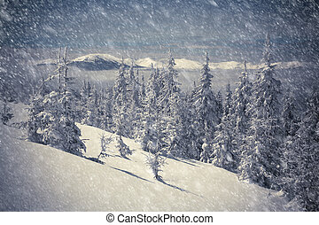 Beautiful winter landscape in the mountains Night scene,...