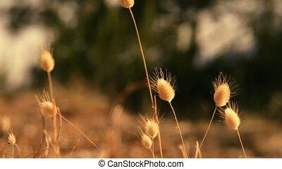 Closeup photo of fresh green grass outdoors