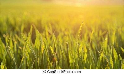 Beautiful plants in a field