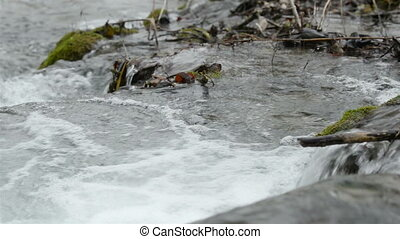 Fast mountain creek flowing in the forest