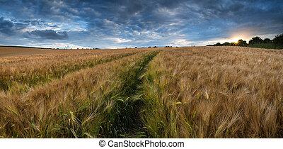 impressionante, campo, paisagem, trigo, campo, verão,...