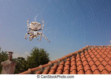 Spider and wasp - Araneus spider sucks captured wasp close...