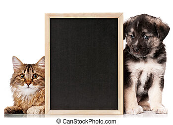 Pets with blackboard - Pretty young cat and nice puppy of...