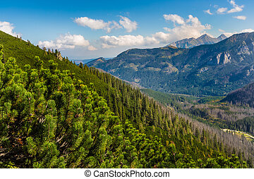 Tatras Mountains covered by green pine forests, Poland.