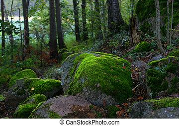 moss on the stones