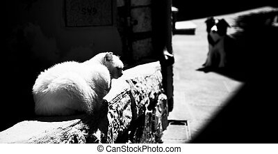 Cat and dog - A white cat rests on a wall and a black and...
