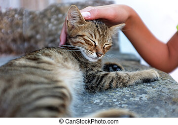 Person is petting a cat - Young person is petting a tabby...