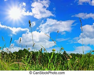 grass and sky - view of the summer sky through the grass