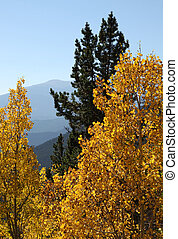 Golden Aspen Leaves - Layered mountains framed by golden...
