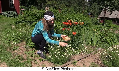 girl healthy camomile - zoom in of young gardener woman pick...
