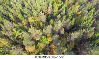 Flying over forest - Camera with top view flying above a...