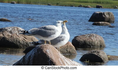 seagulls in a colony of birds with voices