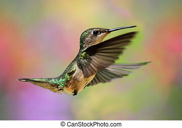 Ruby-throated Hummingbird In Flight - Ruby-throated...