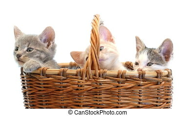 little kittens in a basket - Little funny funny kittens...
