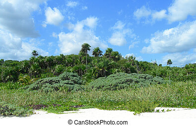 Tropical vegetation in Mexico