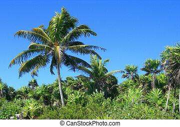 Tropical Caribbean landscape