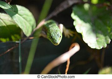 Green crested lizard on green grass