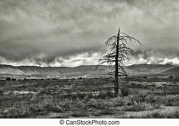 Dead Tree - Dead tree stands alone in field as snowstorm...