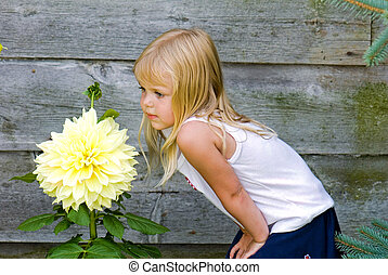 Dahlia Delight - Little girl check out a huge dahlia blossom...