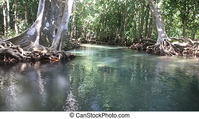 clear water flows among the mangrove roots of trees in the...