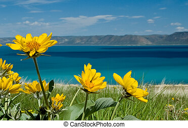 Bear Lake Flowers - Bear Lake is located on the UtahIdaho...