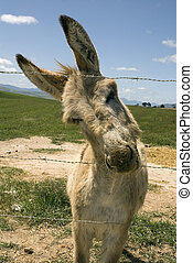 Donkey in field - A donkey in a green field tries to gets...