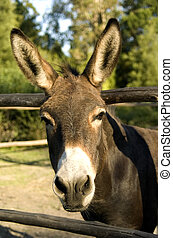 Hallo Donkey - a donkey sticks his head between the poles of...