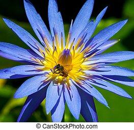 Guam/Lotus Flower - Guam Flowers By James B Clark