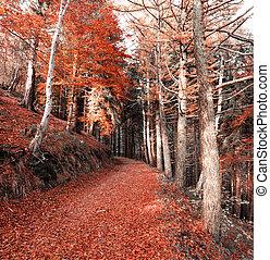 The forest in autumn season - Autumn season in the regional...