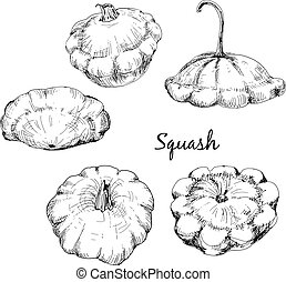 Custard marrow. Set of hand drawn graphic illustrations.