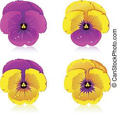 Viola, flowers, isolated on white, vector, eps 8 format