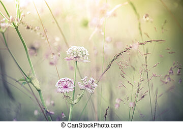 Amazing sunrise at summer meadow with wildflowers. Abstract...