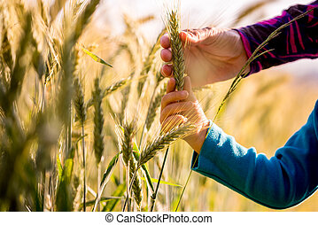 Child and woman holding a ripening ear of wheat growing in...