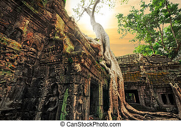 Ta Prohm temple with giant banyan tree at sunset. Angkor Wat...